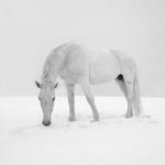 Snežana Dubajić 9